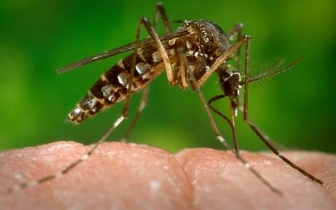 Verdades e avanços sobre o controle da epidemia de Zika vírus